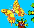 Coloring Picture Butterfly